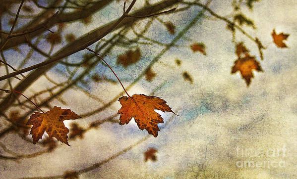 Leaves Poster featuring the photograph Winter On The Way by Rebecca Cozart
