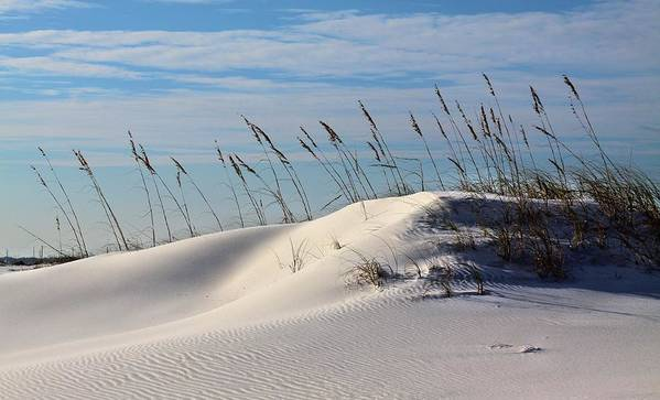 Beach Print featuring the photograph The Dunes Of Destin by JC Findley