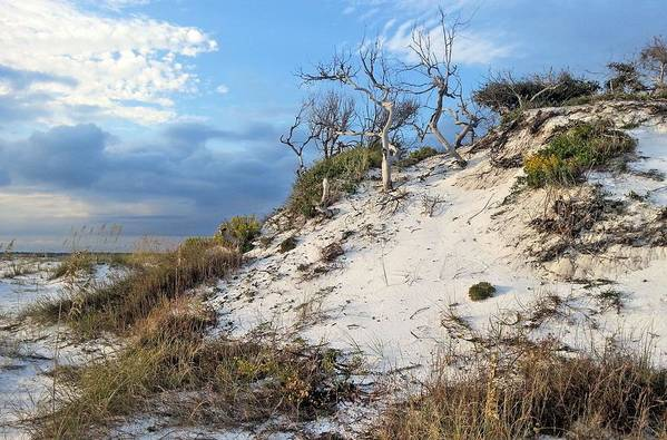 Pensacola Print featuring the photograph Dunes Of Santa Rosa Island by JC Findley