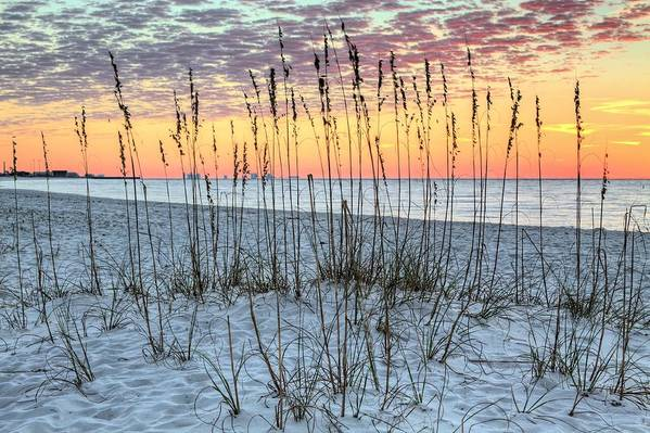 Pensacola Nas Print featuring the photograph Sea Oat Sunrise by JC Findley