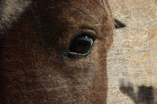 Horse Print featuring the photograph Watching by Toni Hopper