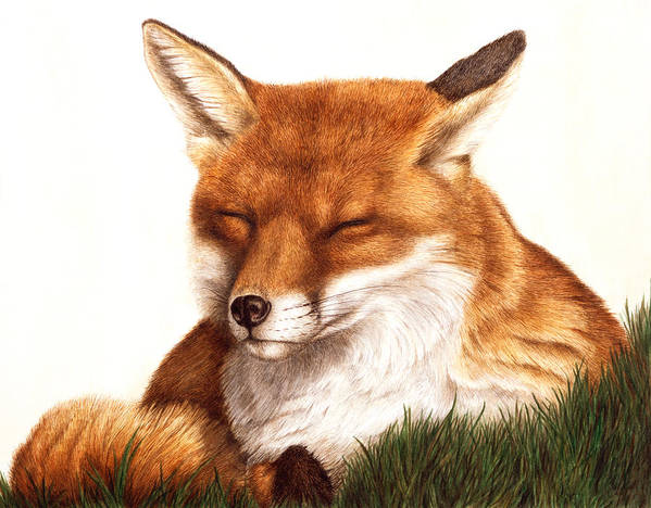 Red Fox Print featuring the painting Sunnin' by Pat Erickson