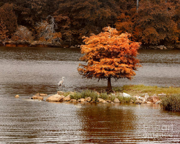 Autumn Print featuring the photograph Private Island by Jai Johnson
