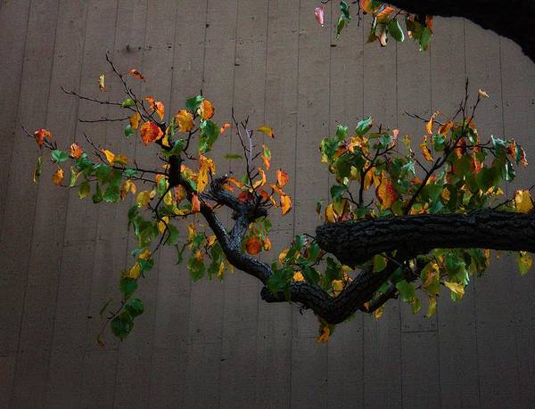 Bouquet From Autumn Leaves Print featuring the photograph Bouquet From Autumn Leaves.three. by Viktor Savchenko