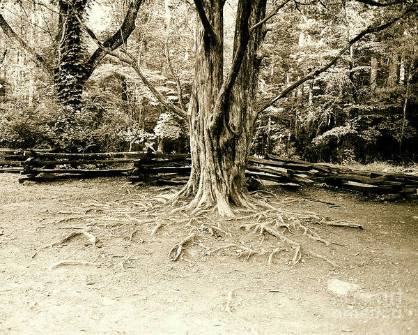 Tree Print featuring the photograph The Matriarch by Scott Pellegrin
