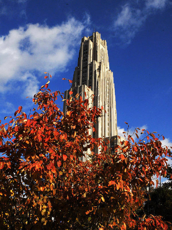 University Of Pittsburgh Print featuring the photograph Pittsburgh Autumn Leaves At The Cathedral Of Learning by Will Babin