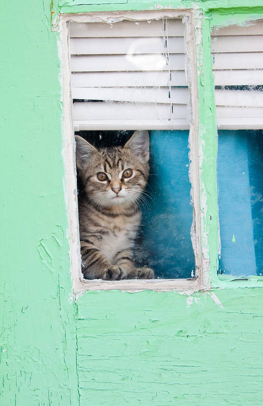 Kitty Print featuring the photograph Peek-a-boo by Jean Haynes