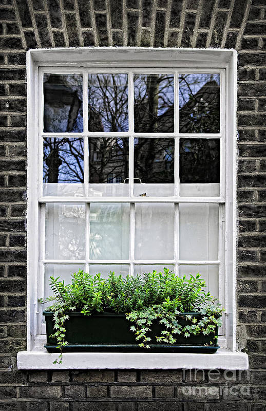 Window Print featuring the photograph Window In London by Elena Elisseeva