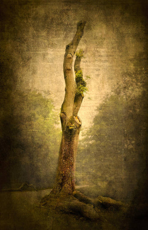 Background Print featuring the photograph Bare Tree by Svetlana Sewell
