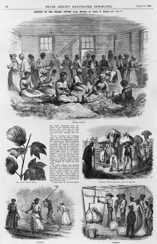 History Print featuring the photograph Five 1869 Illustrations Of Sea Island by Everett