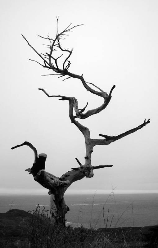 Tree Print featuring the photograph Crooked Tree by Matt Hanson