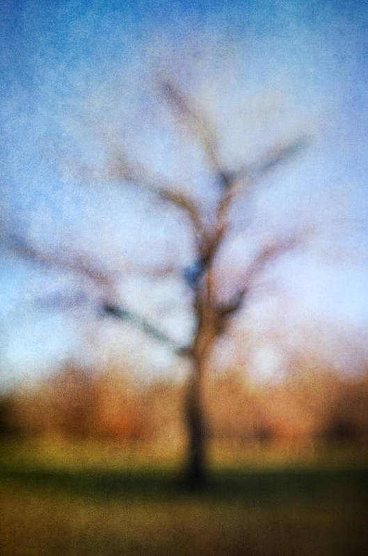 Blur Print featuring the photograph Warner Park Tree by David Morel