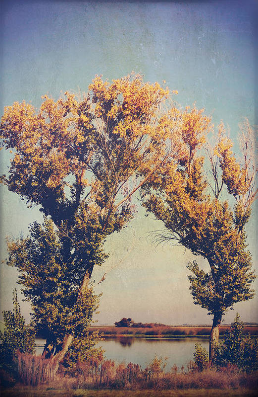 Trees Print featuring the photograph You Were Meant For Me by Laurie Search