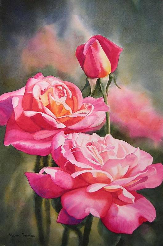 Rose Print featuring the painting Blushing Roses With Bud by Sharon Freeman