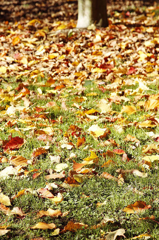 Autumn Print featuring the photograph Autumn by Les Cunliffe