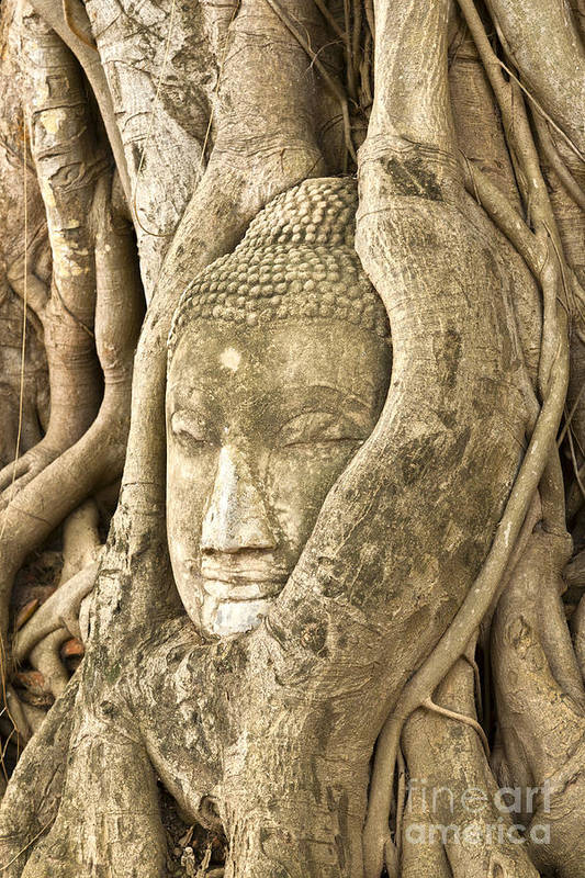 Ancient Print featuring the photograph Head Of Buddha Ayutthaya Thailand by Colin and Linda McKie