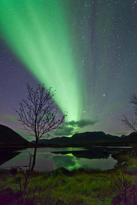 Sky Print featuring the photograph Auroras And Tree by Frank Olsen