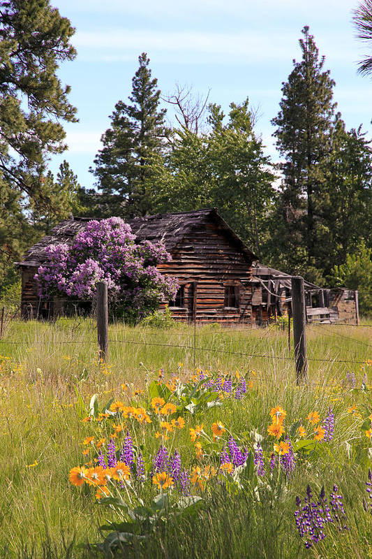 Cabin Print featuring the photograph Cabin And Wildflowers by Athena Mckinzie