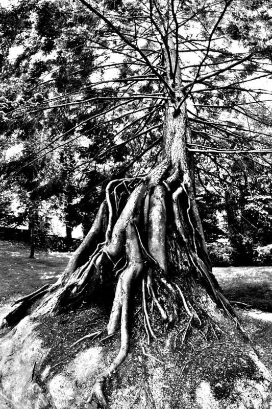 Tree Print featuring the photograph Exposed by Benjamin Yeager