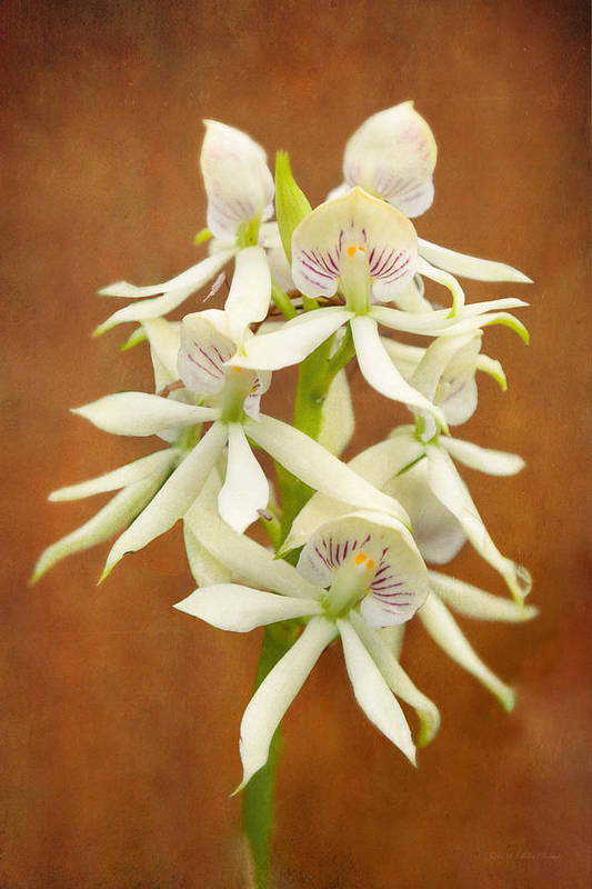 White Flower Print featuring the photograph Flower - Orchid - A Gift For You by Mike Savad