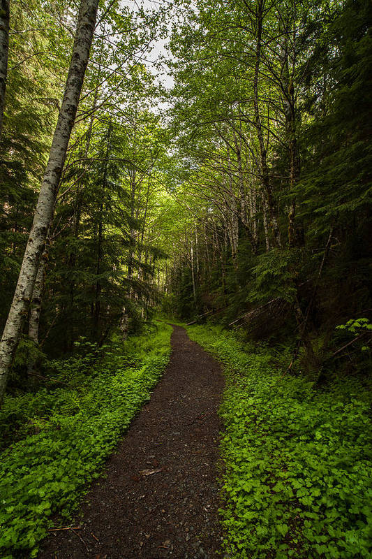Northwest Print featuring the photograph Forest Beckons by Mike Reid