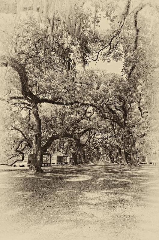 Evergreen Plantation Print featuring the photograph Historic Lane Antique Sepia by Steve Harrington