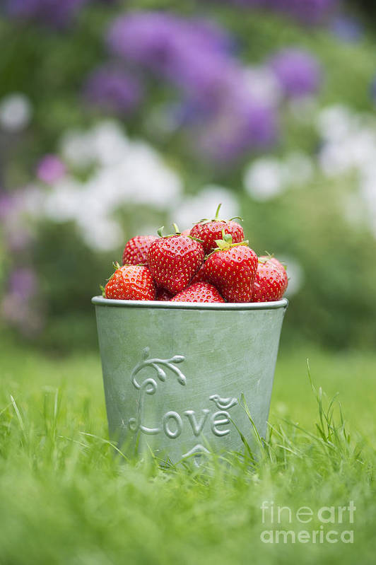 Love Print featuring the photograph Love Strawberries by Tim Gainey