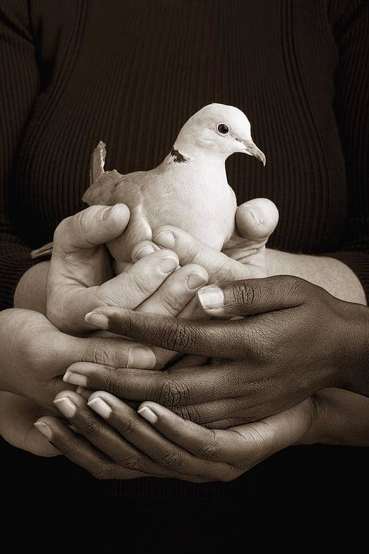 Teamwork Print featuring the photograph Many Hands Holding A Dove by Ron Nickel