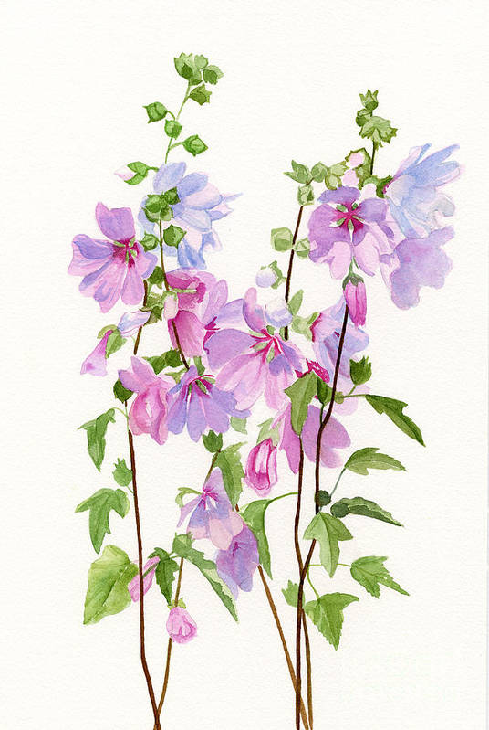 Pink Print featuring the painting Pink Mallow Flowers by Sharon Freeman