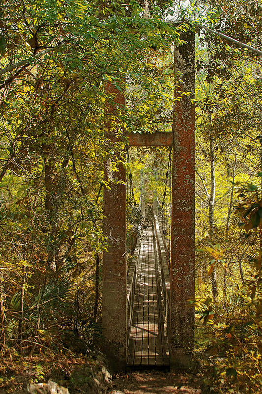 Swinging Print featuring the photograph Ravine Gardens State Park In Palatka Fl by Christine Till