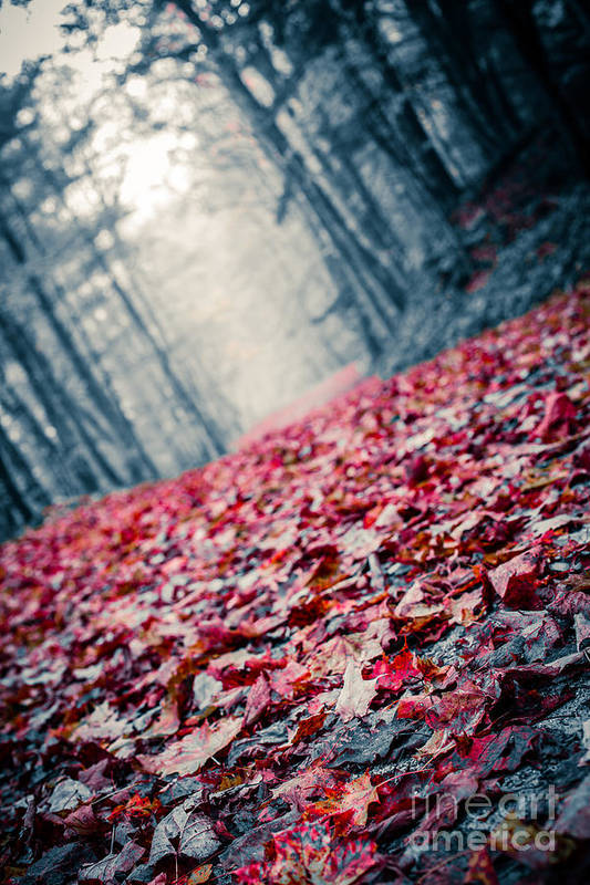 Leaves Print featuring the photograph Red Carpet by Edward Fielding