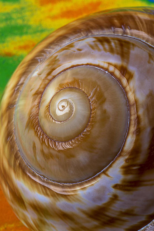 Shell Spiral Print featuring the photograph Shell Spiral by Garry Gay
