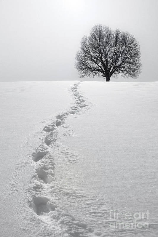 Tree Print featuring the photograph Snowy Path by Diane Diederich