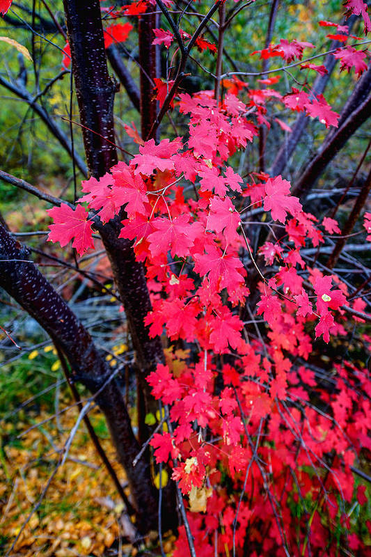 Fall Print featuring the photograph Southern Fall by Chad Dutson