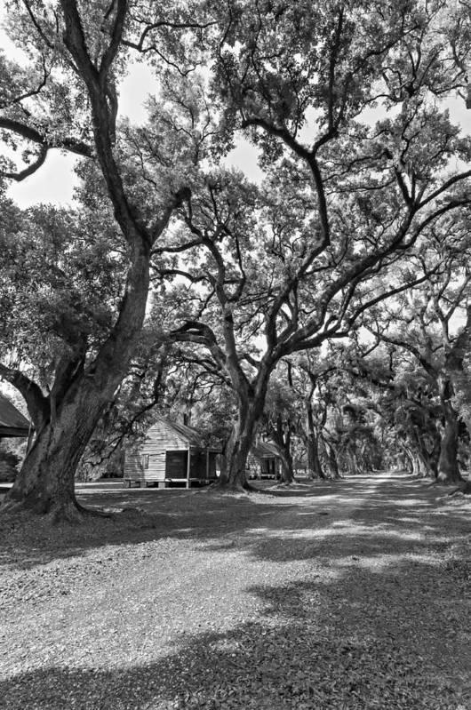 Evergreen Plantation Print featuring the photograph Southern Lane Monochrome by Steve Harrington