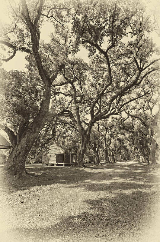 Evergreen Plantation Print featuring the photograph Southern Lane Sepia by Steve Harrington