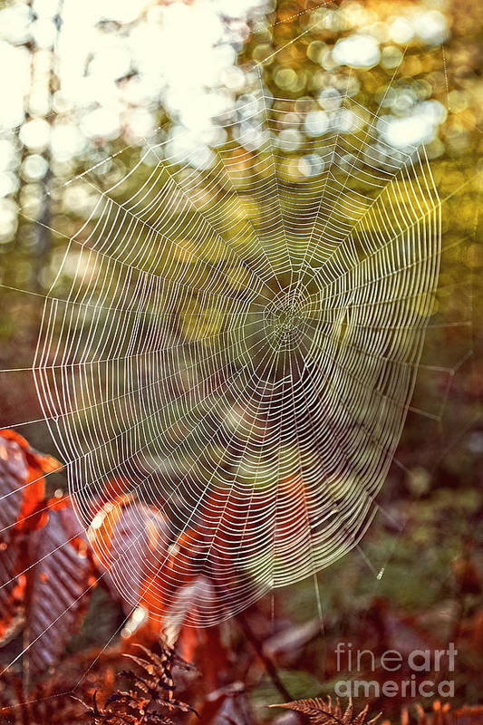 Background Print featuring the photograph Spider Web by Edward Fielding