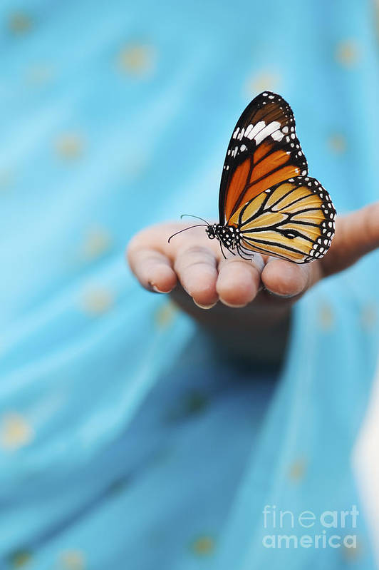 Indian Girl Print featuring the photograph Striped Tiger Butterfly by Tim Gainey