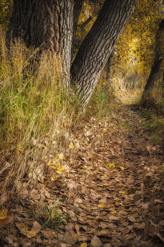 Fall Print featuring the photograph The Fall Way Home by Michael Van Beber