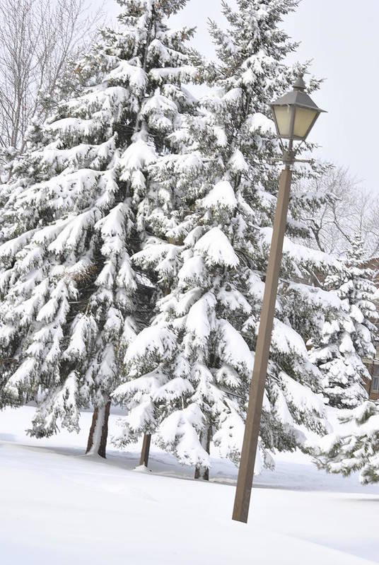Snow Print featuring the photograph The Lamp And The Tree by Frederico Borges