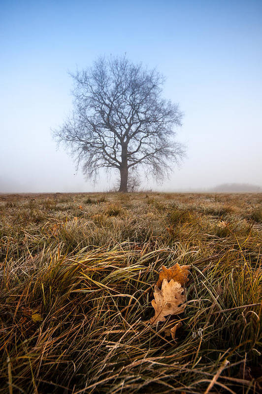 Landscapes Print featuring the photograph The Lone Oak by Davorin Mance