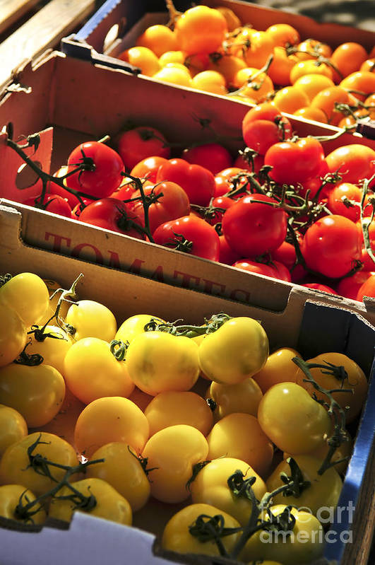 Tomato Print featuring the photograph Tomatoes On The Market by Elena Elisseeva