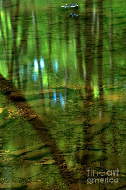 Tree Reflections Print featuring the photograph Translucent Forest Reflections by Adam Jewell