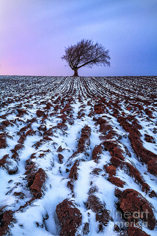 Snow Print featuring the photograph Windswept Tree Scotland by John Farnan