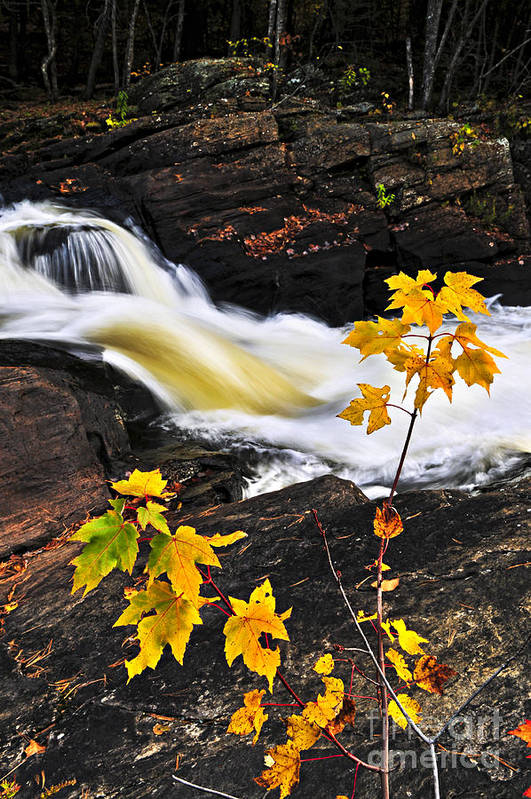 Autumn Print featuring the photograph Forest River In The Fall by Elena Elisseeva