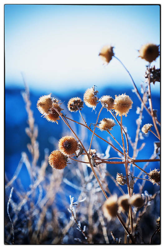 Nature Print featuring the photograph Against The Blue Sky by Lisa Spencer