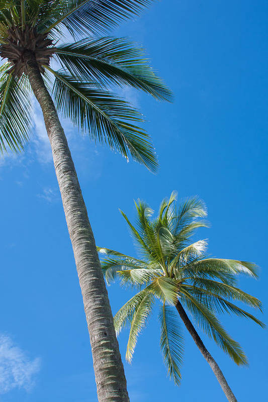 Background Print featuring the photograph Coconuts by Atiketta Sangasaeng