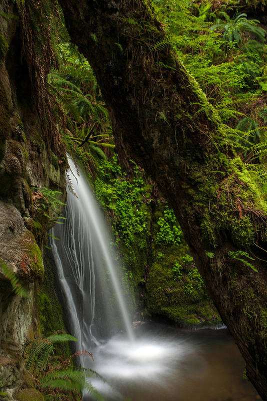 Forest Print featuring the photograph Hidden Falls by Mike Reid