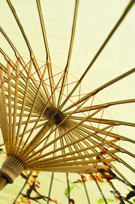 Background Print featuring the photograph Inside Of Parasol by Sam Bloomberg-rissman