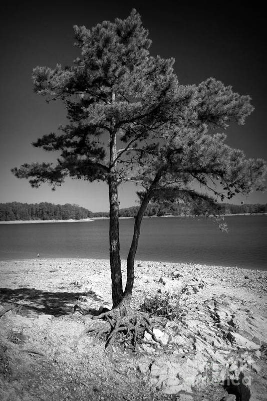 Trees Print featuring the photograph Intertwined by M Glisson